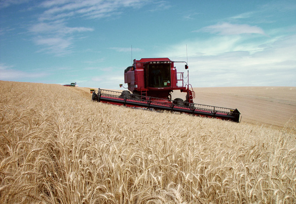 Wheat harvest on state trust land
