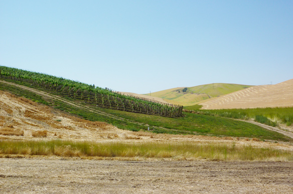 Vineyard development on state trust lands near Walla Walla