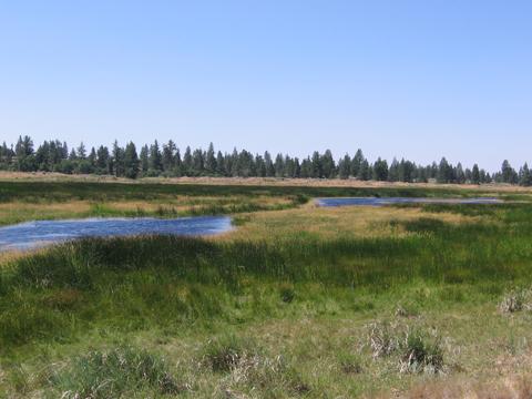 Telford wetland
