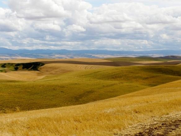 Columbia County dryland