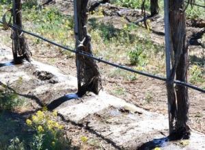 irrigation system-