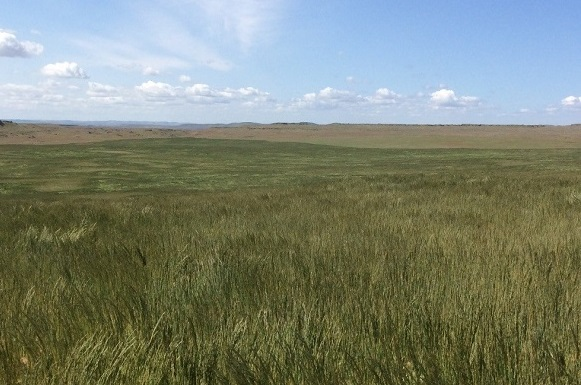 restored-rangeland-crop